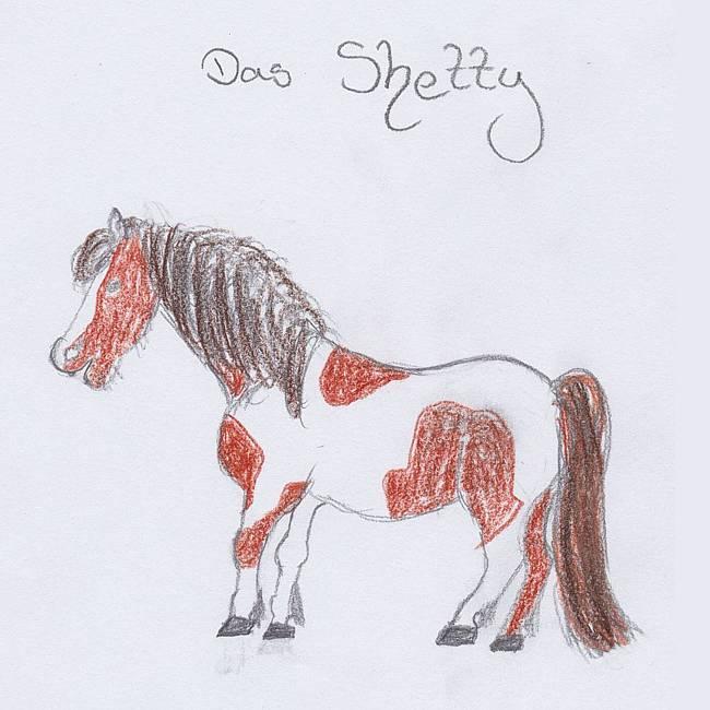 Abzeichen Shetty