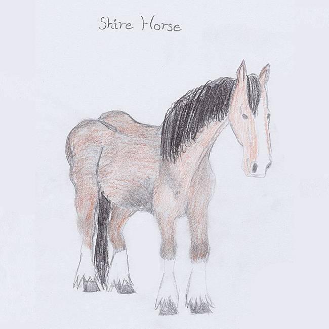 Abzeichen Shire Horse